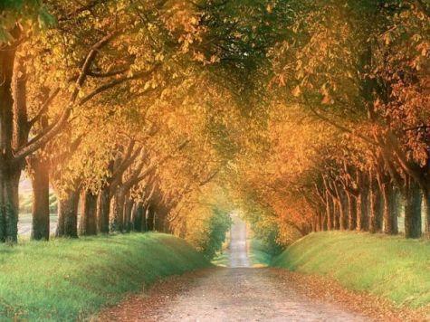 autumn-in-germany.jpg