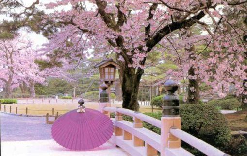 japan_cherry-blossoms.jpg